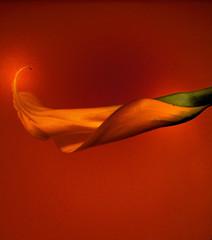 Il sole svanito nel mistero arrotolato in sé - Le soleil évanoui dans le mystère enroulé en soi (Viviane Ciampi) photo by Il linguaggio degli alberi di Ciampi e Cannizzaro