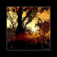 the tree of life in my wild river...!!! / l'arbre de vie dans ma rivière sauvage...!!! photo by Denis Collette...!!!