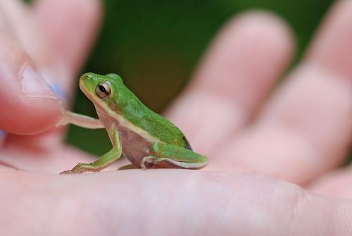 little friend (handshake)