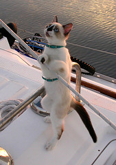Sailor Cat photo by dongato