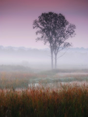Misty autumn dawn photo by James Jordan