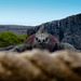 Ecuador and Galapagos-1010407 © Bart Plessers