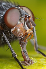 Crop of fly shot photo by Lord V