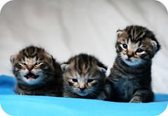 kittens photo by mathias-erhart