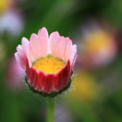 it's always daisy-time photo by jenny downing
