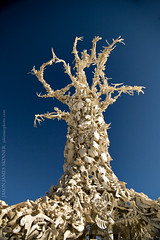Bone Tree photo by skinr