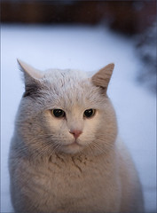 Ice-Cat photo by AnyMotion