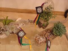 Vasos de Pendurar e de Apoio photo by Vasos Ecológicos