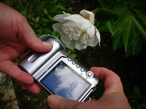 12-CameraFlower