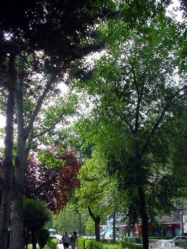 Tree 04 of 22