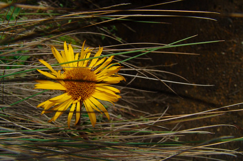 flor con sombras