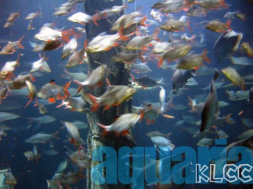 aquaria8