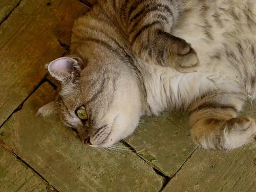 「莫內的花園」裡遇見的貓兒