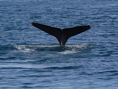 Whale photo by oefe