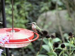 HummingbirdFeeder5