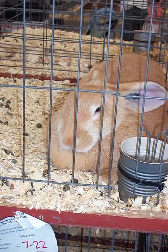 Stoner bunny