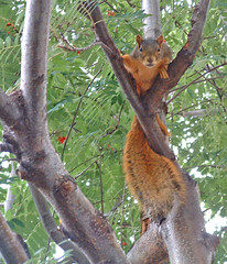 squirrel peering down from a tree