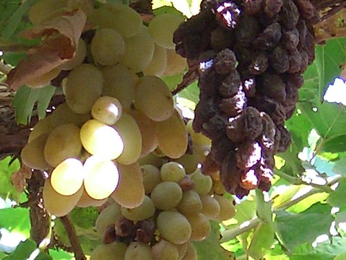Turpan Valley of the Grapes