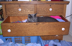 Artemis in a drawer