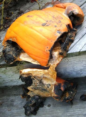 Rotten Pumpkins 1