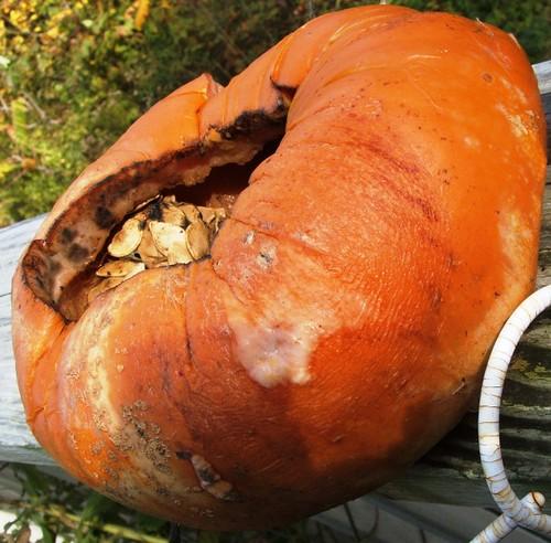 Rotten Pumpkins 2