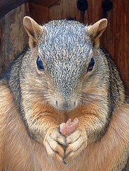 squirrel with nut in its paws