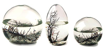 ecosphere cool gadget