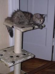 Ebba på ställningen liten