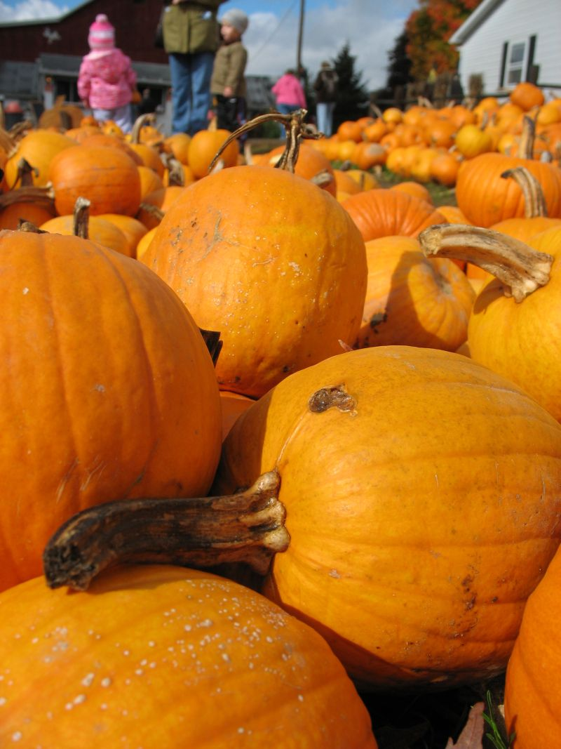 All sorts of Pumpkins