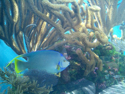... do from the Aquarium -- we will have to post some of those later