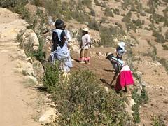 Isla del Sol - 15 - Women ploughing