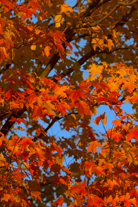 AutumnLeavesLoRes