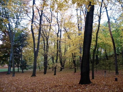 Fall, Stromovka Park, Prague