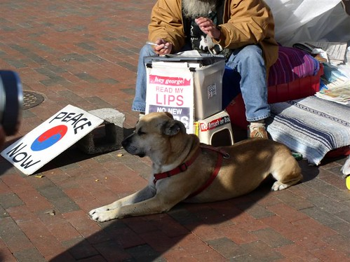 Protesting Hippie Dog in front of White House