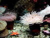 flow, vancouver aquarium (1)