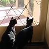 Kittens ante portas