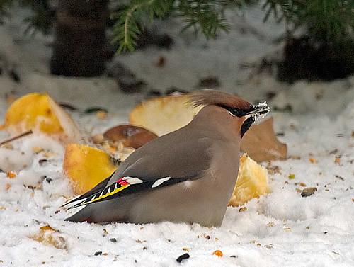 Krótki Kurs Rozpoznawania Ptaków Karmnikowych Cz 4
