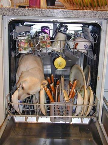 dog inside of dishwasher licking a bowl