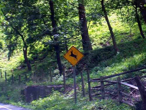 A Deer Crossing Sign
