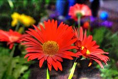 flores-3.jpg