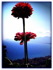 16/08/08 - Sognando il mare... photo by ☆ Susyfox ☆