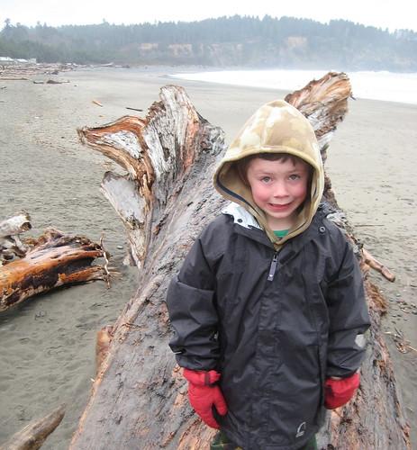driftwood II