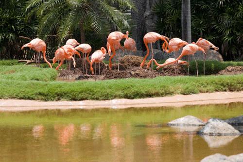flamingos.gif