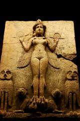 Queen of The Night photo by ~مبـــــارك~[(QTR)]~Mubarak~