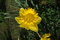 Spring around me_0033