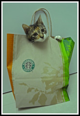 kitten from Starbucks ...!?!? photo by Lavinia.Che