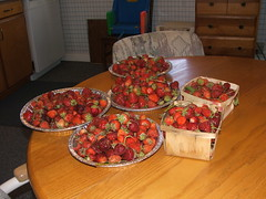 Bounty of Strawberries