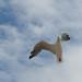 In motion, a flight