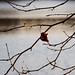 wandeling-3083 © Bart Plessers