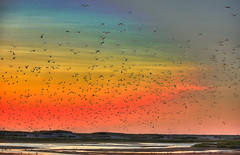 Birds in Race Point (HDR) photo by Wei Zhang@Hudson